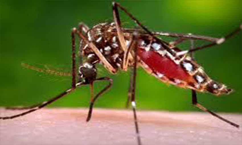 Attention aux moustiques tigres